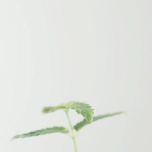 petite plantes