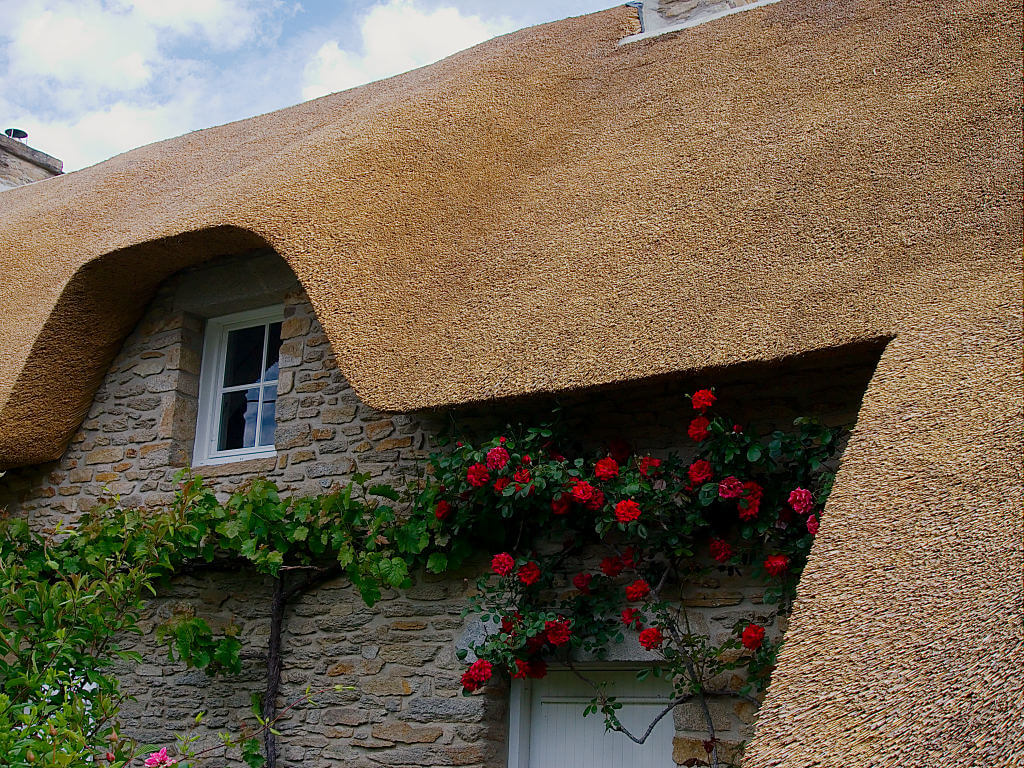 Le roseau est un isolant cologique tr s performant - Maison en toit de chaume ...